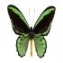 View Event: Secret World of Butterflies